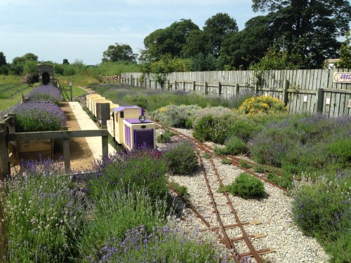Wolds Way Lavender master beds