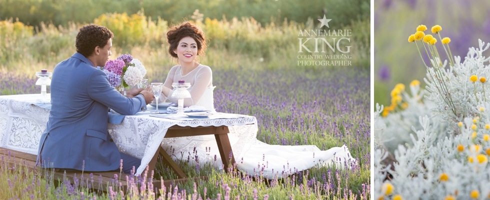 Wolds Way Lavender 2