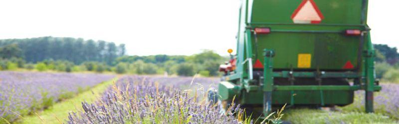 lavender harvester 1a