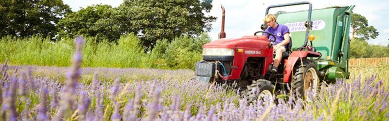 lavender harvester 2a