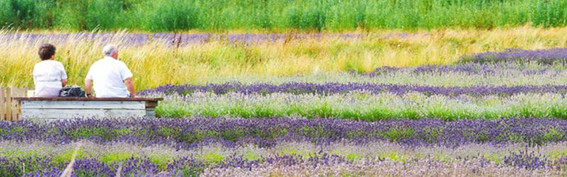 relaxing lavender 1a