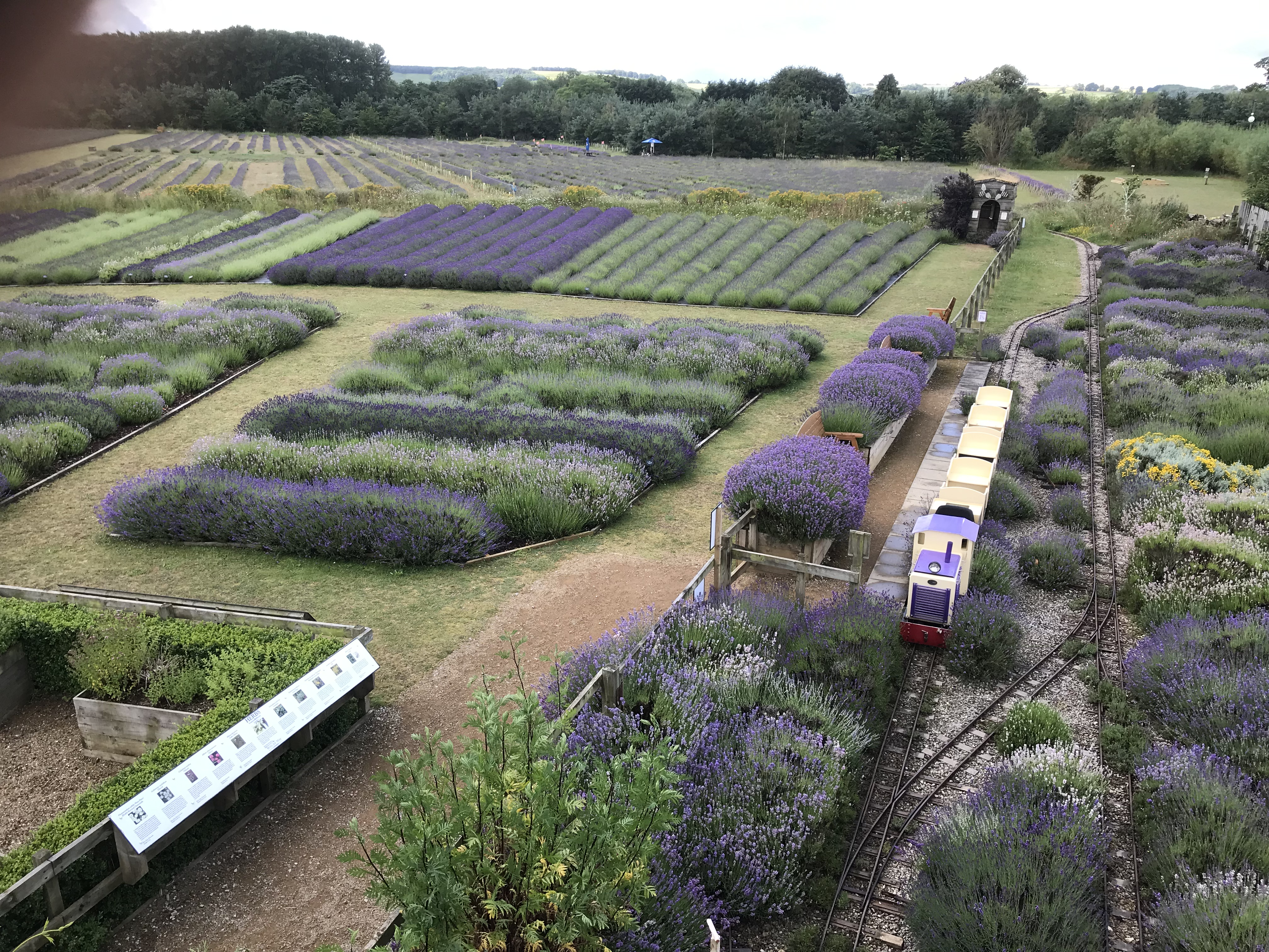 Wolds Way Lavender – Grown on the Wolds sold to the World!